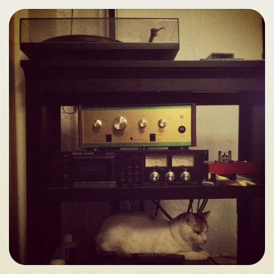 Stereo cat